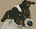 Mini Fox Terrier Puppy - Cross Stitch Chart