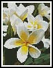 Mini Frangipani - Cross Stitch Chart