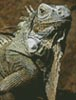 Mini Iguana - Cross Stitch Chart