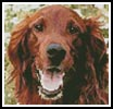 Mini Irish Red Setter 2 - Cross Stitch Chart
