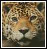 Mini Jaguar - Cross Stitch Chart