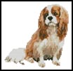 Mini King Charles Cavalier - Cross Stitch Chart