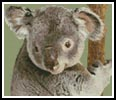 Mini Koala in Tree - Cross Stitch Chart