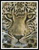 Mini Leopard Close Up - Cross Stitch Chart