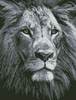 Mini Lion Close up (Black and White) - Cross Stitch Chart