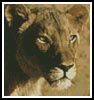 Mini Lioness - Cross Stitch Chart