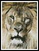 Mini Lion Face - Cross Stitch Chart