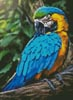 Mini Macaw Profile - Cross Stitch Chart