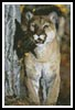 Mini Mountain Lion - Cross Stitch Chart