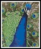 Mini Peacock 1 - Cross Stitch Chart