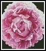 Mini Peonie - Cross Stitch Chart