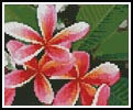 Mini Pink Frangipanis - Cross Stitch Chart