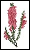 Mini Pink Heath Flowers - Cross Stitch Chart