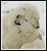 Mini Polar Bear Hug - Cross Stitch Chart