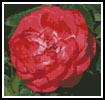 Mini Red Camellia - Cross Stitch Chart