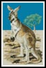 Mini Red Kangaroo - Cross Stitch Chart