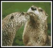 Mini River Otters - Cross Stitch Chart