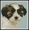 Mini Shih Tzu Puppy - Cross Stitch Chart