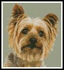 Mini Silky Terrier - Cross Stitch Chart