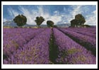 Mini Spring Landscape - Cross Stitch Chart
