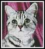 Mini Tabby Face - Cross Stitch Chart