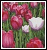 Mini Tulips photo - Cross Stitch Chart