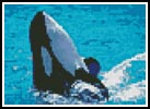 Mini Whale 2 - Cross Stitch Chart