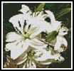 Mini White Lilies Photo - Cross Stitch Chart