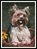 Mini Yorkshire Terrier 2 - Cross Stitch Chart
