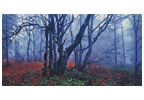 Misty Forest - Cross Stitch Chart