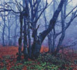Misty Forest (Crop) - Cross Stitch Chart