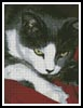 Molie - Cross Stitch Chart