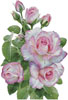 Morning Roses - Cross Stitch Chart