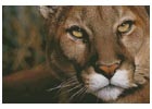 Mountain Lion Portrait - Cross Stitch Chart