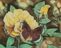 Mourning Cloak - Cross Stitch Chart