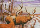 Mule Deer in a Cornfield - Cross Stitch Chart