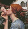 My Sweet Rose (Detail) - Cross Stitch Chart