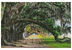 Oak Tree Path - Cross Stitch Chart