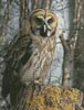 Owl Photo - Cross Stitch Chart