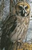 Owl Photo (Crop) - Cross Stitch Chart
