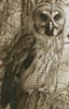 Owl Photo Sepia (Crop) - Cross Stitch Chart