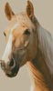 Palomino Horse - Cross Stitch Chart