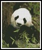 Panda 2 - Cross Stitch Chart