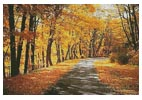Path Through Autumn Trees - Cross Stitch Chart