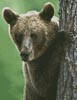 Peekaboo Bear - Cross Stitch Chart