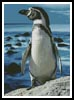 Penguin Photo - Cross Stitch Chart