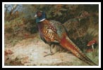 Pheasants - Cross Stitch Chart