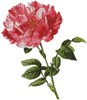 Pink Floral - Cross Stitch Chart