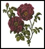 Pink Roses - Cross Stitch Chart