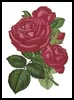 Pink Roses 4 - Cross Stitch Chart
